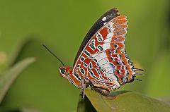 butterfly in tanzania