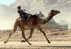 united states camel corps