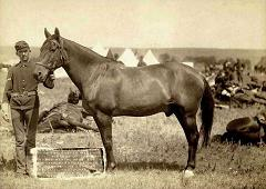 captain miles keogh's horse comanche