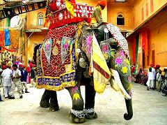 When Were Elephants First Domesticated In Asia and Are Elephants Still Used as Transportation In India?