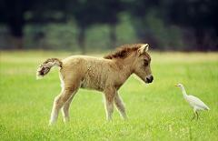 miniature horse and bird
