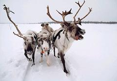 What Are The Names Of Santa S Eight Reindeer And Why Is Donder