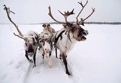 santas reindeer