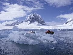 How Much Life Does the Artic Have Compared to Antarctica and Is the Arctic Barren Like Antarctica?