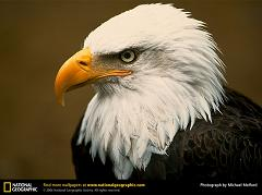 How Did the Bald Eagle Become the National Symbol of the United States?