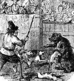 What Is Bear-Baiting, How Did It Originate, and What Kind of Bear Did They Use for Bear-Baiting?