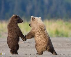 How Did the Bear Get Its Name, What Does It Mean, and How Do Bears Mate and Reproduce?