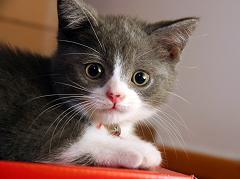 cats have a very sensitive sense of hearing