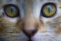 cats are color blind