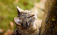cats love to climb trees