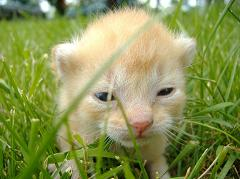 indoor cats live longer than outdoor cats
