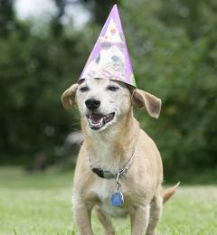 how many dog years is one human year