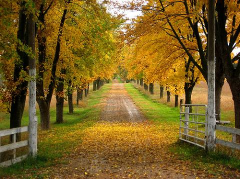 How Did the Words Driveway and Parkway Originate and What is the Difference Between a Driveway and a Parkway?