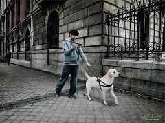 guide dog leading blind person