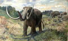 mastodon from the ice age
