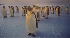 How Did the Penguin Get its Name