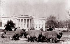 When Were Sheep Kept at The White House