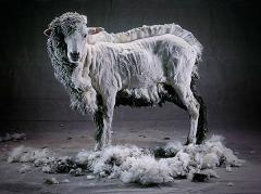 What are the Benefits of Wool as a Fabric