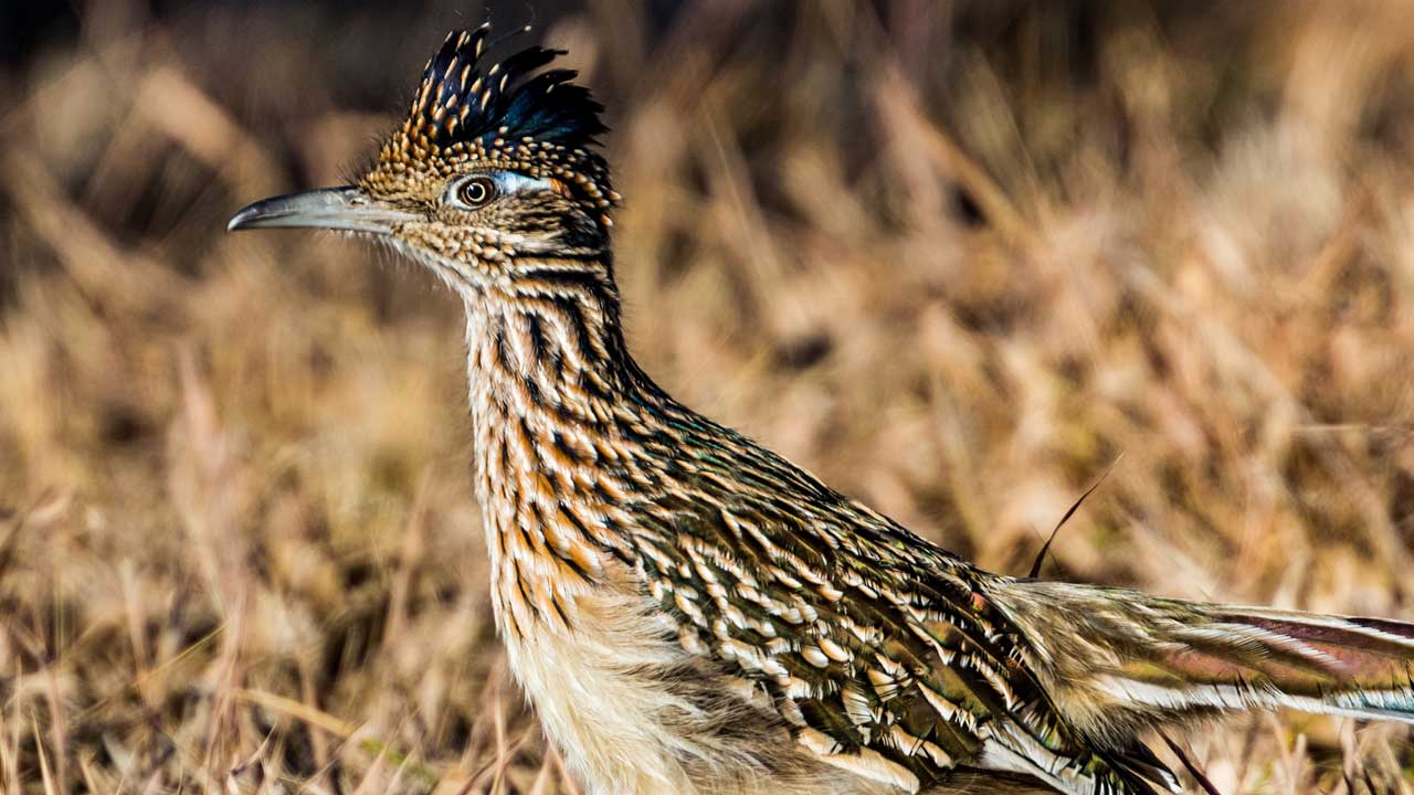 roadrunner thinking about stuff