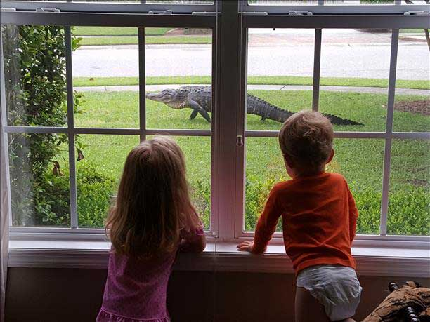 alligator word