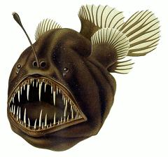 How Deep In the Ocean Do Deep Sea Fish Live and What Is the Deepest Depth a Fish Can Live?