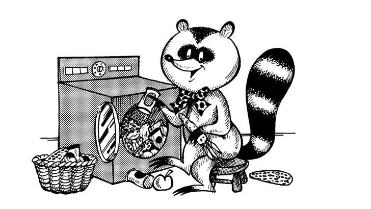 a raccoon washes its food