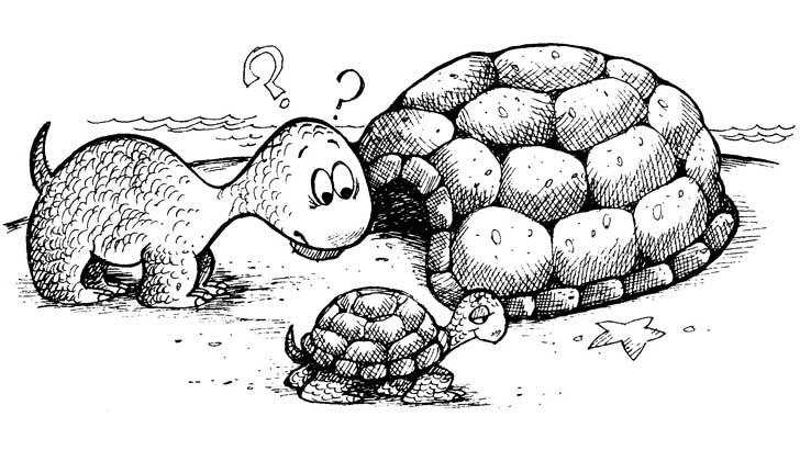 turtle outside its shell