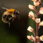 """Who Wrote The Orchestral Interlude """"Flight of the Bumblebee"""" and Which Russian Opera was it Written For?"""