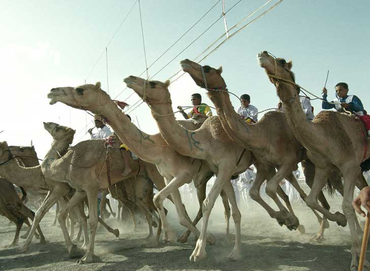 which is faster a horse or a camel