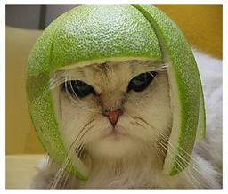 cat-melon-hat