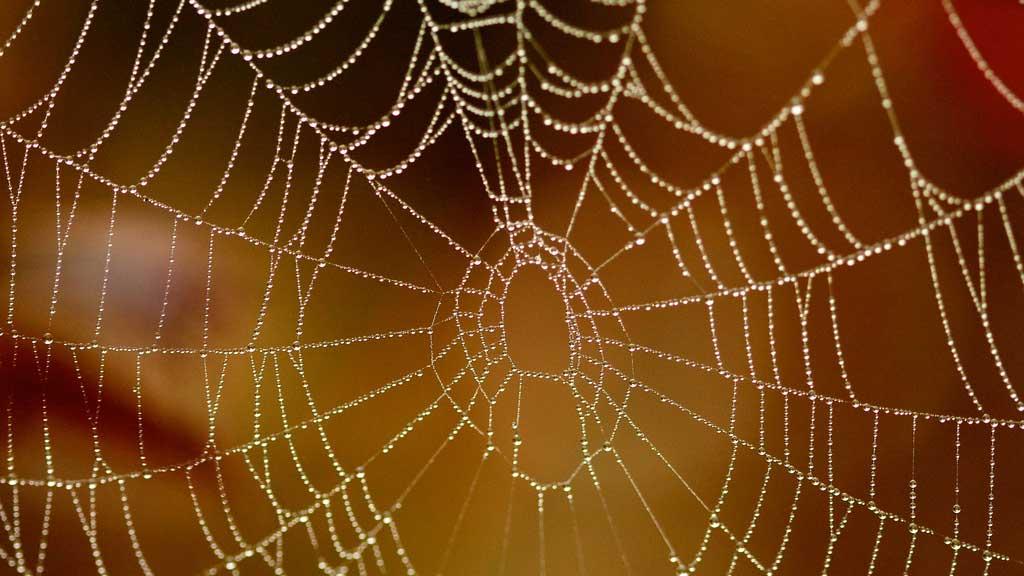 cobweb with dew