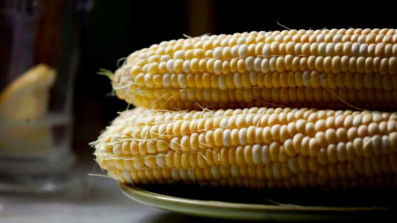 where did corn originate