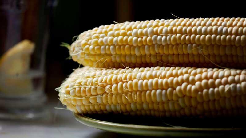where did corn originate