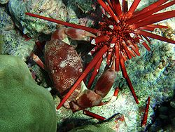 crab-wiki