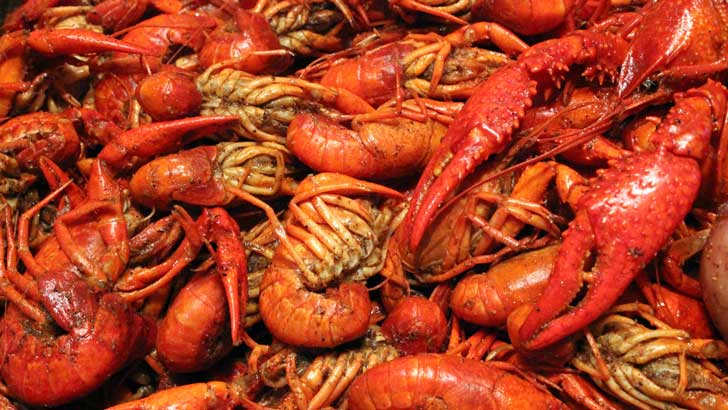 where did the word crawfish come from