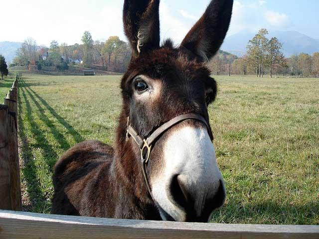donkey ass