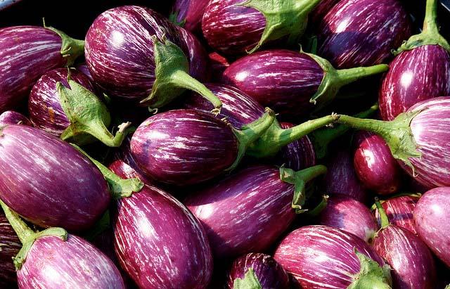 eggplant name