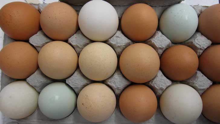fresh eggs that go bad