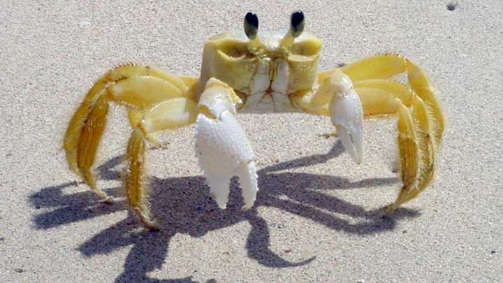 how do crabs breathe on land