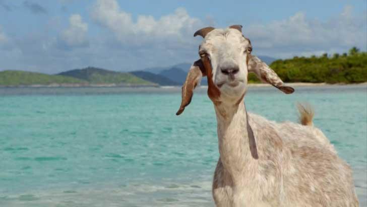 like hogan's goat