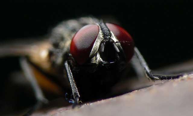 alaska has no houseflies