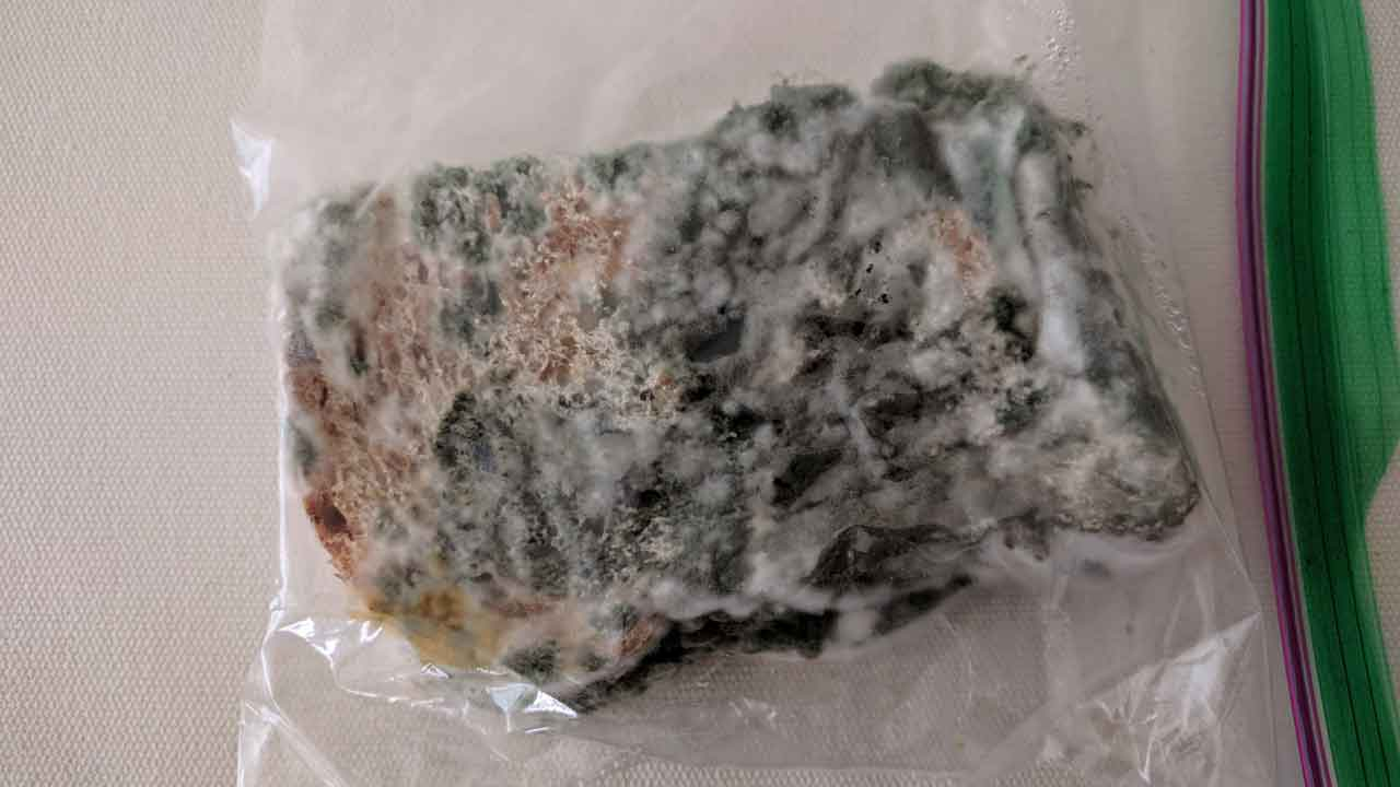 moldy bread in a ziplock bag