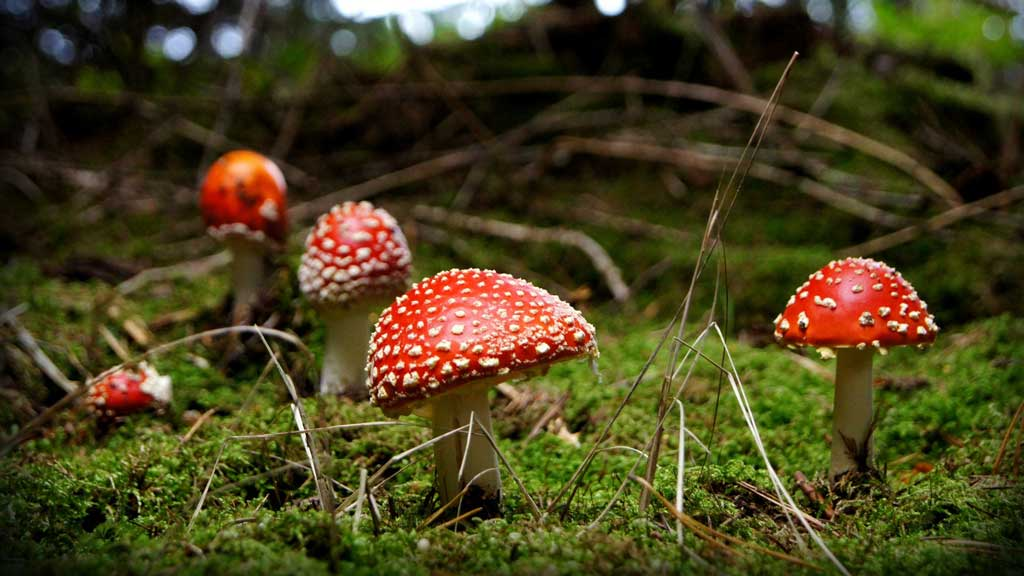 mushrooms in a forest