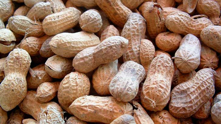 what does the word peanut mean