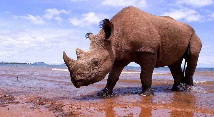 how did the rhinoceros get its name