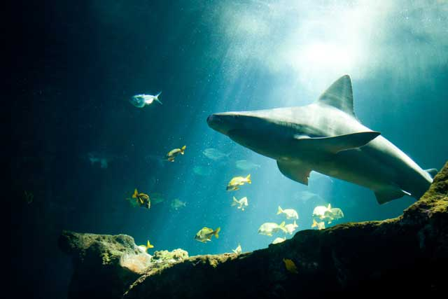 How Did Sharks Get Their Name and How Are They Different From Mammals Like Whales and Dolphins?
