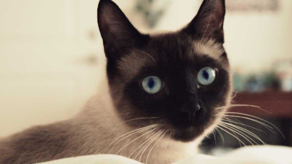 sylvester the talking cat videos