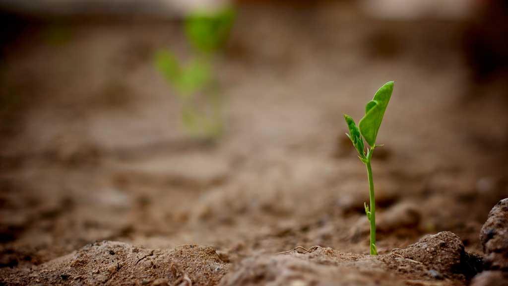 where does soil originate